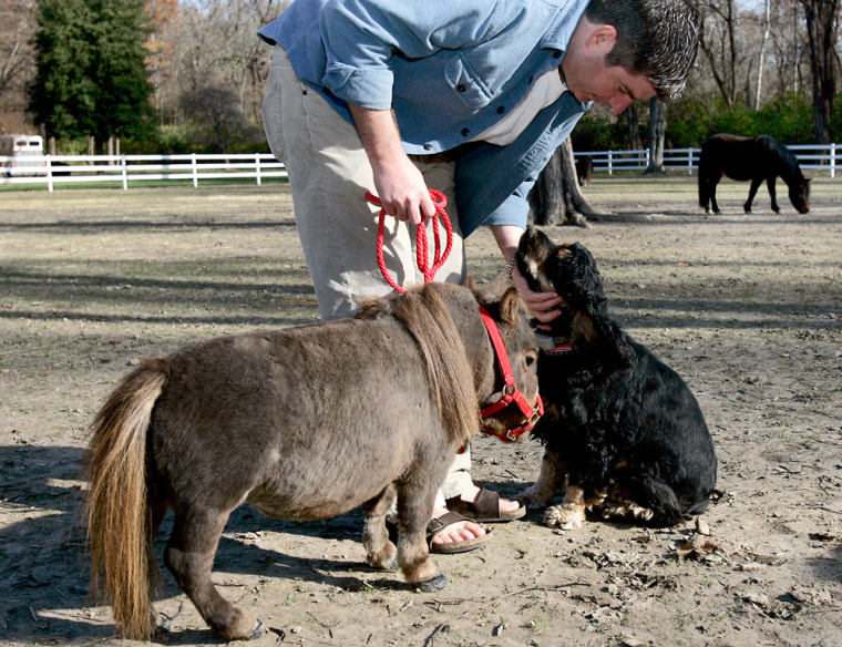 Michael Goessling stops to pet a cocker spaniel while walking Thumbelina,the world's smallesthorse, at Goose Creek Farms in St. Louis.