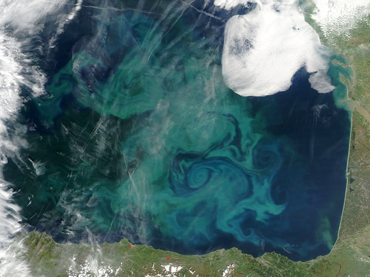 A satellite captured this image of swirls in France's Bay of Biscay that are a bloom of phytoplankton —tiny, shrimp-like creatures that absorb carbon dioxide from the atmosphere. That has led to research into artificially creating the blooms to absorb more CO2 and, hopefully, slow global warming.