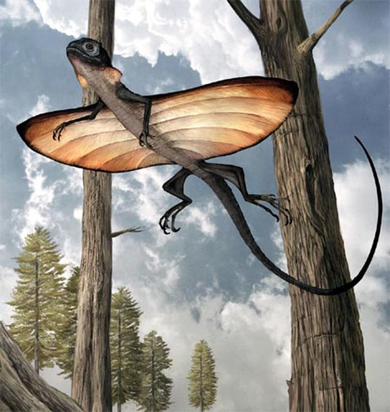 An artist's conception shows the ancient gliding lizard Xianglong zhaoi in flight.