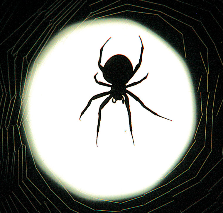 Afraid of spiders? Your fear may have been learned from seeing others respond to them on TV or movies.