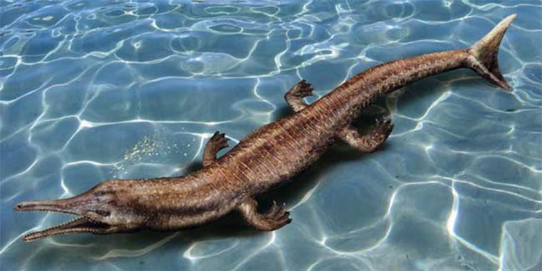 An artist's rendering shows how the fossilized remains of a Jurassic crocodile found in Oregon may have appeared in water.