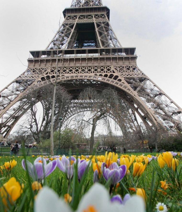 Some crocus flowers bloom nearthe Eiffel tower in Paris.