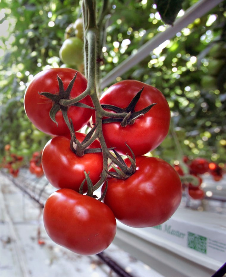Researchers found that growing tomatoes in 10 percent seawater improved antioxidant levels significantly.