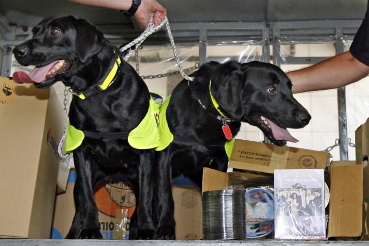 A pair of black labrador retrievers name