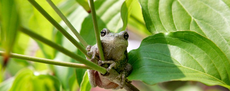 A Tree Frog Looks Content Sitting On A Tree Branch