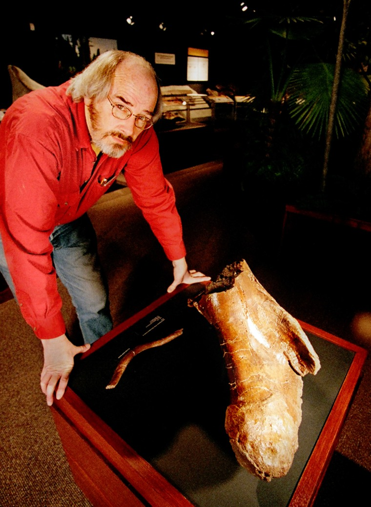 Paleontologist Jack Horner stands in front of a broken T. rex femur. Researchers say they have isolated collagen proteins found in the bone using cutting-edge techniques.