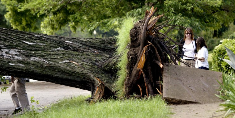 Dallas residents on Thursday check out a huge tree that fell during Wednesday night storms.