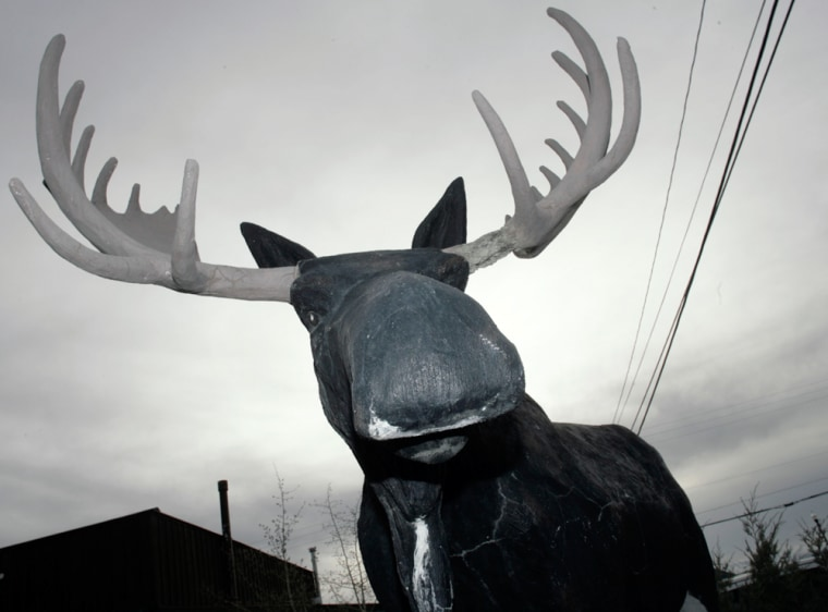 A statue of a moose overlooks Highway 14 as it wends its way through the tiny North Park community of Walden, Colo. Small towns throughout the interior West like Walden are turning to wildlife tours to entice visitors to the areas and infuse cash into the struggling local economies.