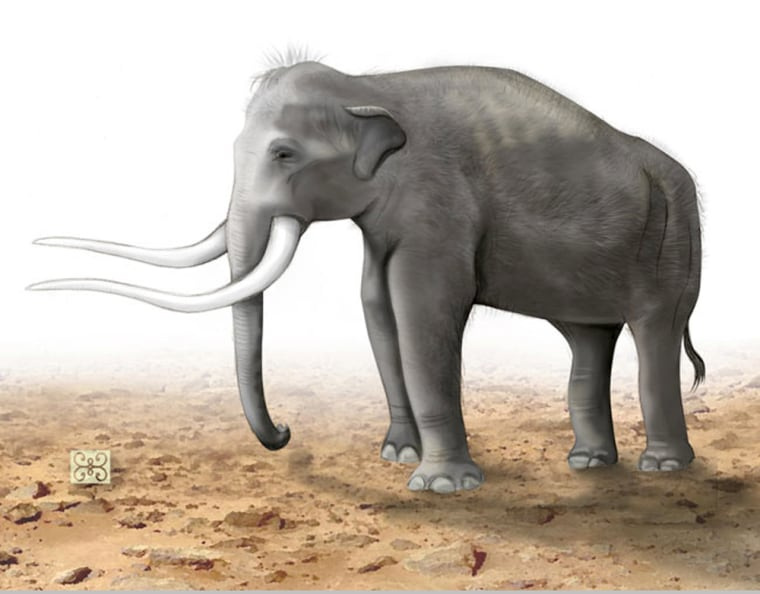 Mastodons are easily confused with elephants and mammoths. All three animals belong to the order Proboscidea, but mastodons were smaller than mammoths and have straight tusks.