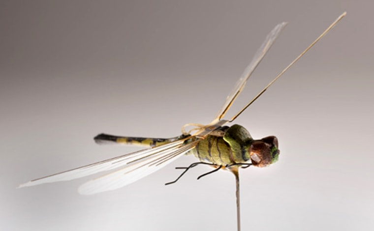 "Through the years, a number of high-tech gizmos have been developed for the CIA, including this Micro Unmanned Aerial Vehicle Dragonfly from the 1970s. The camouflaged ""insectothopter"" had a miniature engine to move the wings up and down. The flight tests were impressive, but control in any kind of crosswind proved too difficult."
