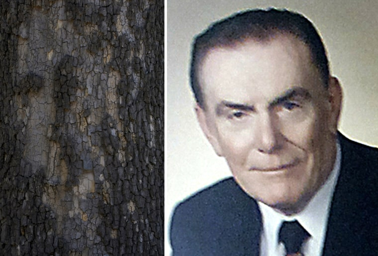 Some residents of Rosemont, Ill., say that the peeling bark on a sycamore tree, left, bears the eerie likeness of their former mayor, Donald Stephens.