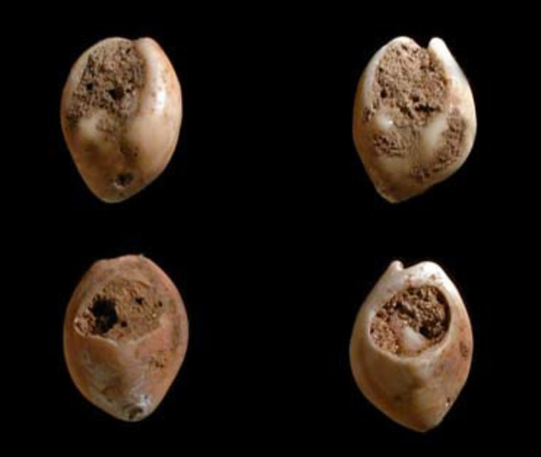Some of the twelve shell beads dated to 80,000 years ago discovered in Morocco.