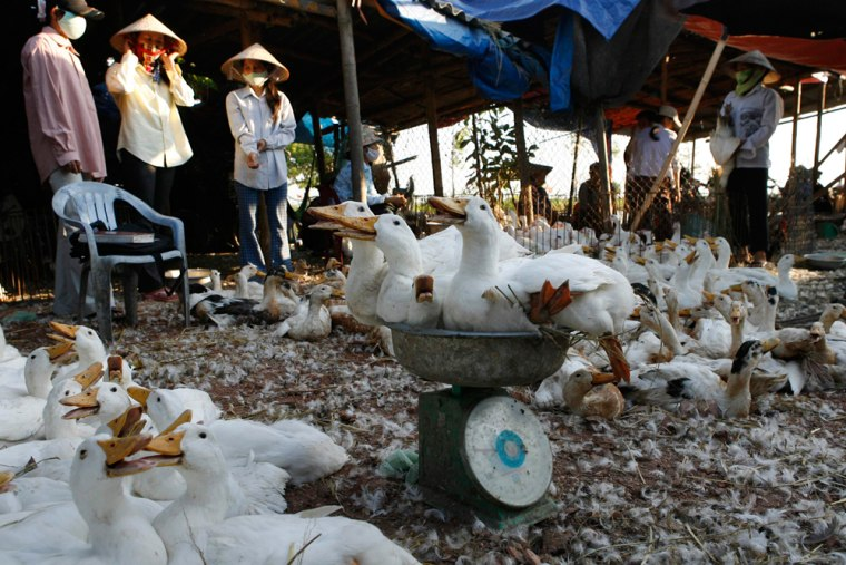 Ducks are loaded on weighing-scale at whole-sale poultry market in Hatay province, outside Hanoi