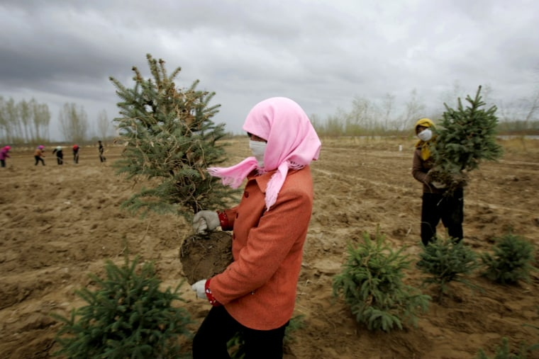 Villagers plant trees in China's GansuprovincelastApril 16 as part of what so far has been a losing battle against desertification.