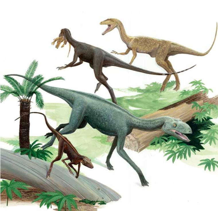 The coexistenceofclosely-related dinosaurs like those depicted in this illustration showsthat the rise of dinosaurs was prolonged rather than sudden.