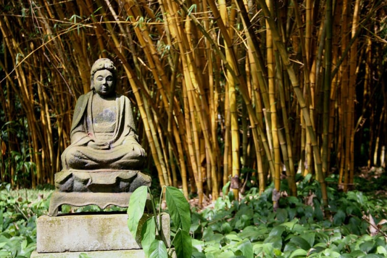 An image of a Buddha stands amid bamboo at the Allerton Garden on Kauai, Hawaii. The north shore site of the National Tropical Botanical Garden features a variety of plants native to the islands. At the garden headquartered on Hawaii's Garden Isle, resident scientists face the challenge of snatching the Pacific islands' quickly disappearing plants from the brink of extinction.