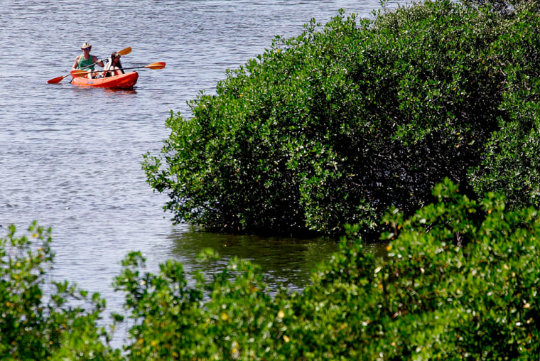 A couple floats in a kayak among the Mangrove trees at the Weedon Island Preserve in St. Petersburg, Fla. Besides the paddling trails, the nearly six square miles of Weedon Island Preserve offer miles of hiking trails and an observation tower.