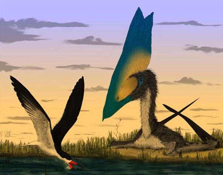 Pterosaurs such as Thalassodromeus, right, could not have skimmed water to feed as birds such as the modern Rynchops, left, can.