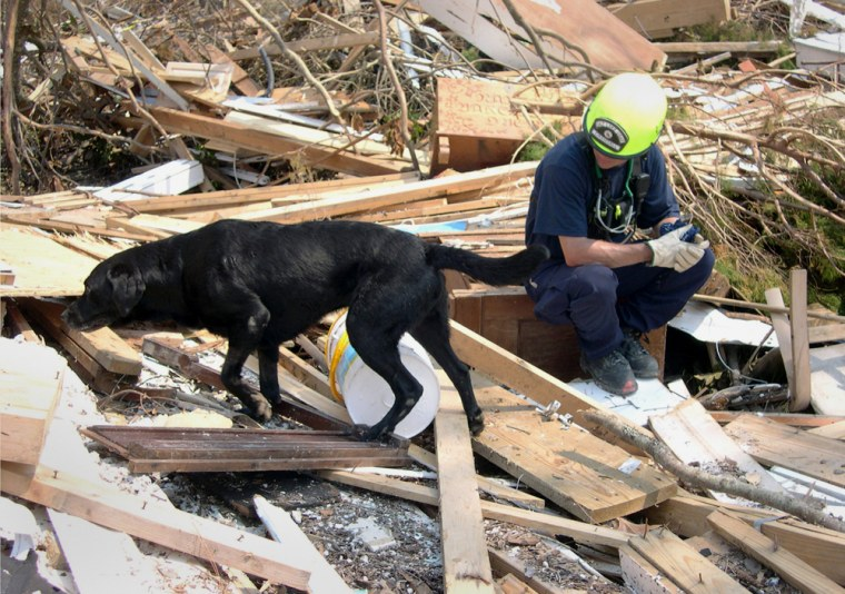 In this September 2005 photo released by Mary Flood, Jake, a black Labrador retriever search and rescue dog, searches in the debris of Hurricane Katrina in Mississippi as a rescue worker watches nearby. Jake, who also helped search the rubble following the Sept. 11 attacks, died Wednesday.