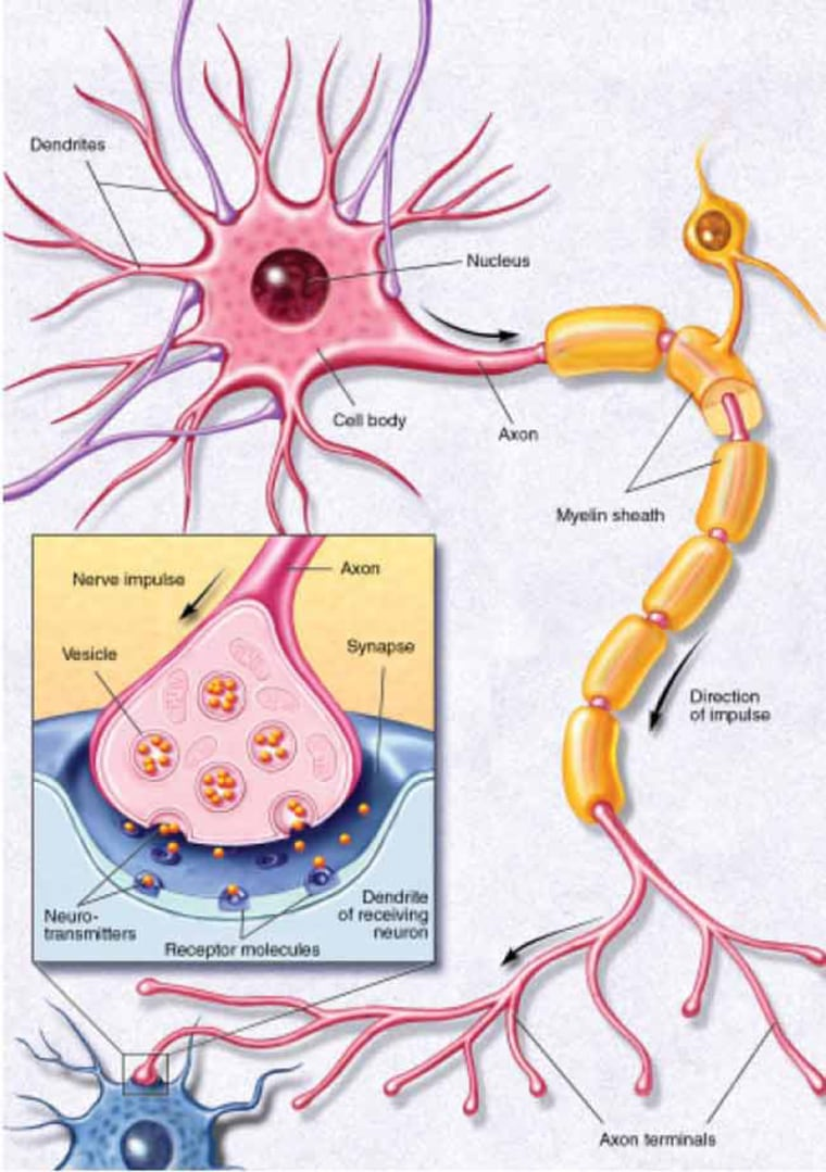 Cognition occurs when millions of brain cells (neurons) communicate with each other at the same time.