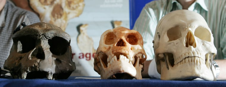 """The identity of the famed """"hobbit"""" fossil, the skull of which is shown here, at center, has been debated since 2003. A new study lends weight to the theory that the remains were a human ancestor."""