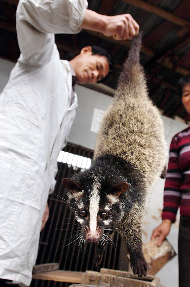 CHN: Civet Cats Farm In Central China's Anhui Province