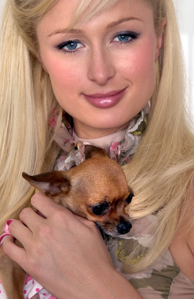 "Reality TV star Paris Hilton posing with dog, Tinkerbell,"" at a hotel in New York on Thursday April 28, 2005, is now transitioning into acting . In ""House of Wax,"" opening nationwide Friday, May 6, 2005, Hilton does horror. When it comes to her paparazzi-exposed personal life, the 24-year-old has become more interested in being a housewife than a club hopper.(AP Photo/Jim Cooper)"