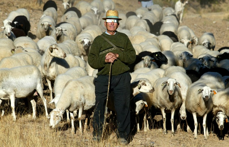 Portuguese villager Jose Preto, 78 years old, watches the progress of the solar eclipse, through a pair of special sun-blocking glasses, while tending a flock of sheep  at Rio de Onor, Braganca, northern Portugal, near the Spanish border, Monday, Oct. 3, 2005.  Thousands of people gathered across Portugal and Spain on Monday morning to catch a glimpse of a rare and spectacular type of solar eclipse. (AP Photo/Paulo Duarte)