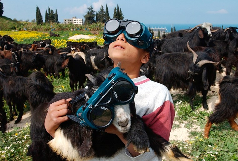 A young Lebanese shepherd carries a goat as he watches a partial solar eclipse in the village of Bqosta, near the southern port city of Sidon, Lebanon, Wednesday, March 29, 2006. In Lebanon the Education Ministry ordered all public schools closed for the day with advice to families to keep children indoors during the solar eclipse which started around noon. (AP Photo/Mohammed Zaatari)
