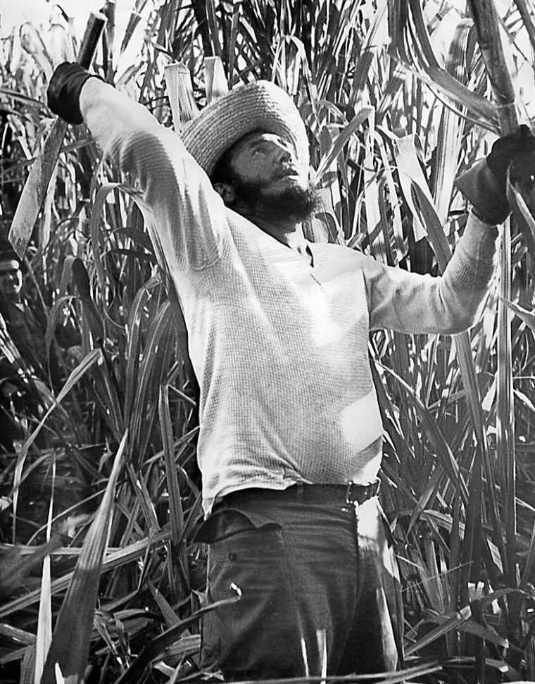 Cuban leader Fidel Castro Ruz cuts sugar cane in a