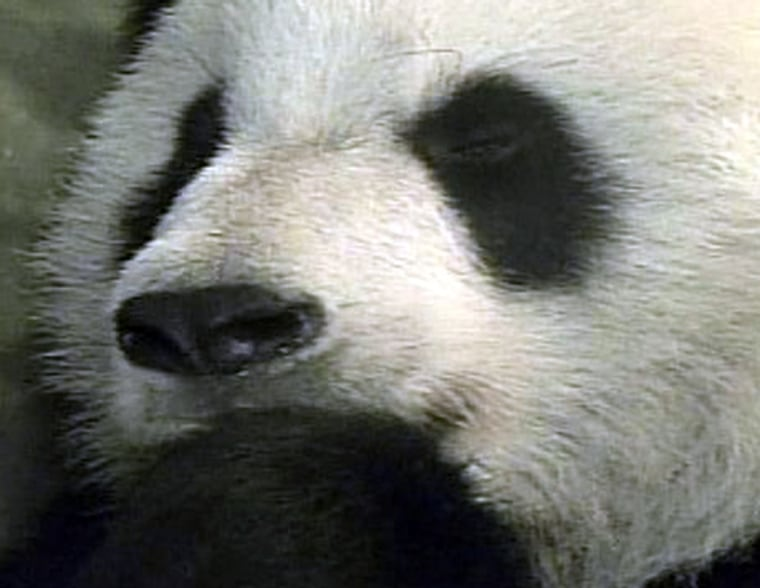 The Memphis Zoo says Ya Ya, a 6-year-old giant panda on loan from China, has miscarried, based on the results of an ultrasound test.