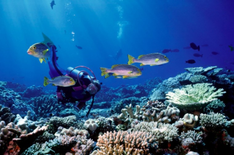 The islands that make up the Maldives are known for excellent diving, with over 600 species of brightly colored, exotic fish as well as reefs and shipwrecks. Several resorts offer expeditions.