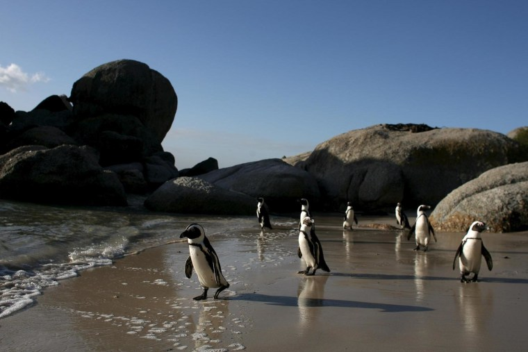 Image: Boulders Beach in Cape Town, South Africa