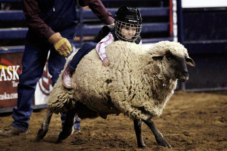 "Haley Walker, 5, hangs onto a sheep in the ""Mutton Bustin'"" competition at the 108th National Western Stock Show in Denver on Jan. 11, 2014."