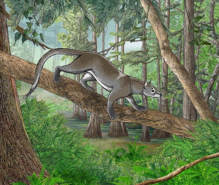 Image: Carnivore ancestor