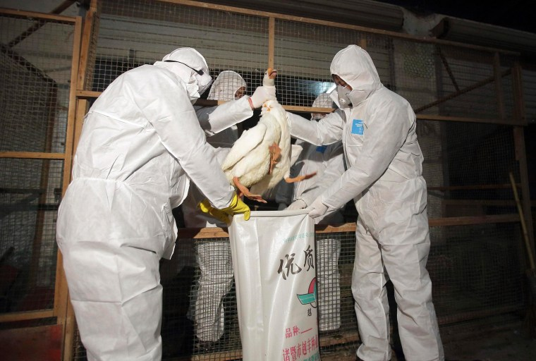 Health officials in protective suits put a goose into a sack as part of preventive measures against the H7N9 bird flu at a poultry market in Zhuji, Zhejiang province on Jan. 5, 2014.