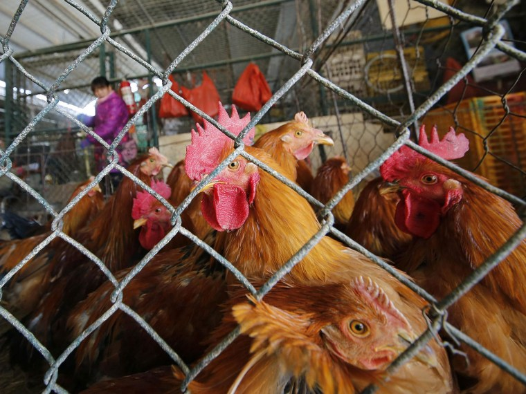Chickens are kept in a cage at a wholesale poultry market in Shanghai. A spate of bird flu cases since the beginning of the year in China has experts watching closely as millions of people and poultry are on the move ahead of the Lunar New Year holiday, the world's largest annual human migration.