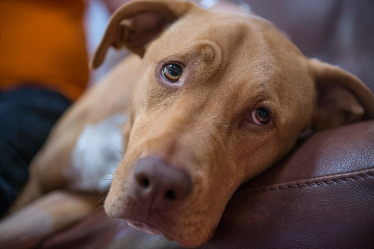 Image: Zoe, a 3 year old mixed breed