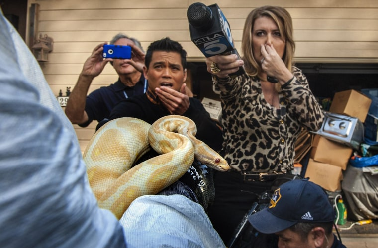 Image: Reporters try to stave off the stench coming from a house filled with snakes