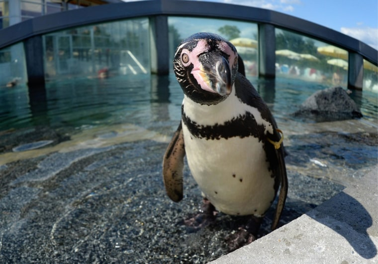 Image: Penguins at Spreewelten water park