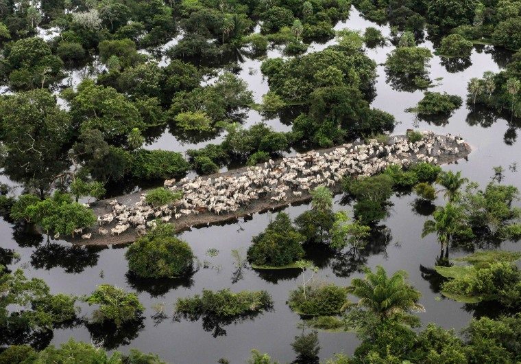 Image: An aerial view shows stranded cattle in the flooded region of Ballivian province in the Beni department