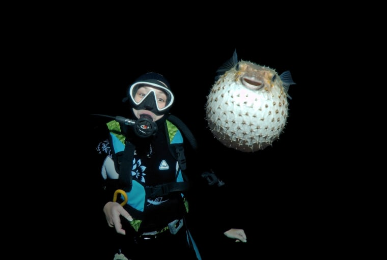 Image: Spotted Porcupinefish
