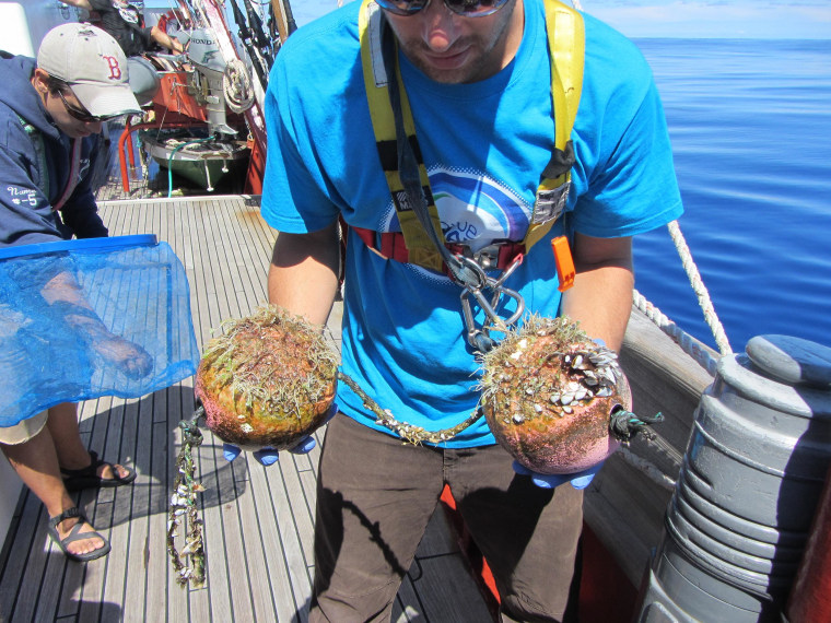 Image: SEA Education Association scientist Greg Boyd holds recovered foam floats containing invertebrates and microbial biofilm.