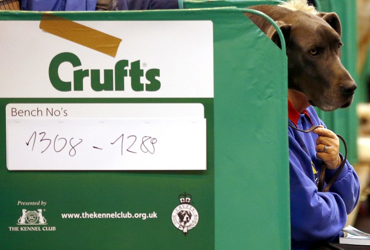 Image: A woman sits with a Great Dane during the first day of the Crufts dog show in Birmingham