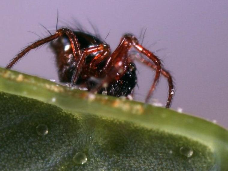 Image: New spider