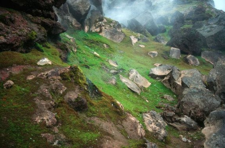 Volcanic steam hovers over fields of mosses on the Antarctic South Sandwich Islands.