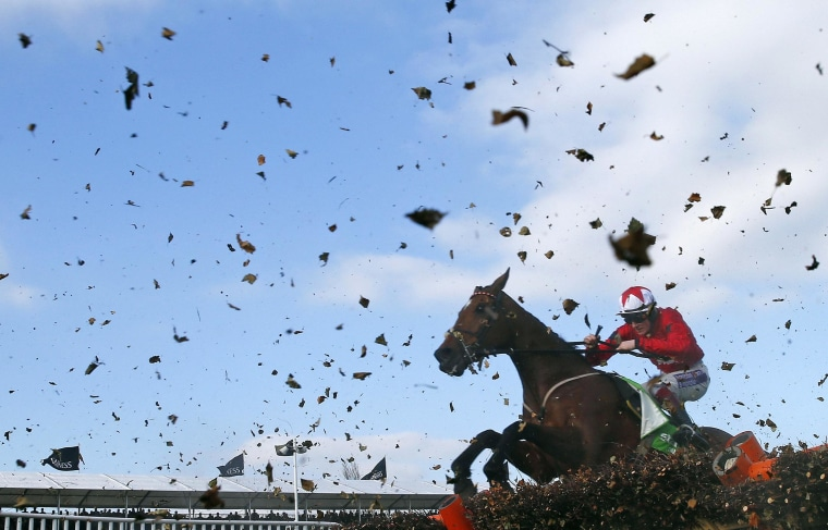 Sam Twiston-Davies on The New One jumps the final fence of the Champion Hurdle Challenge Trophy at the Cheltenham Festival horse racing meet in Gloucestershire, western England March 11, 2014. REUTERS/Eddie Keogh (BRITAIN - Tags: SPORT HORSE RACING TPX IMAGES OF THE DAY)