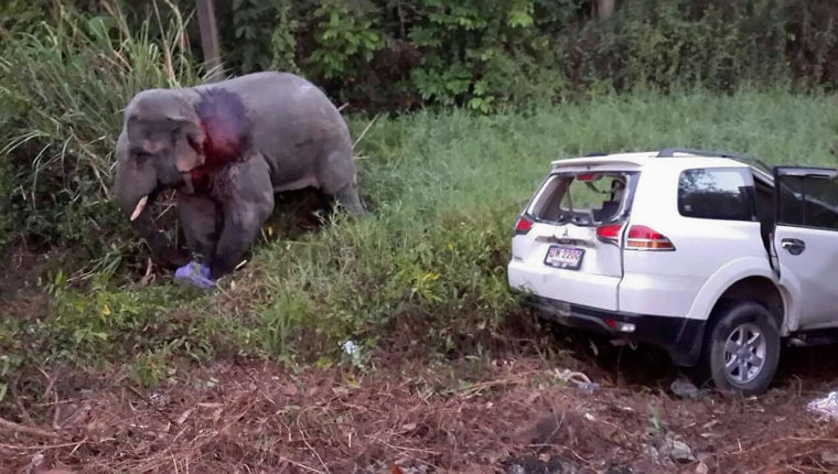 Image: An elephant walks past vehicle after it crashed into it at a roadside in Rayong province