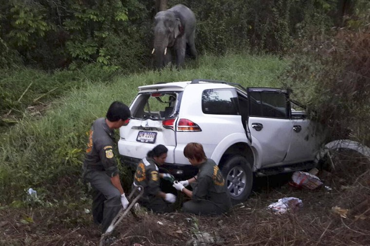 Image: Rescue workers inspect the site where a vehicle crashed with an elephant at a roadside in Rayong  province