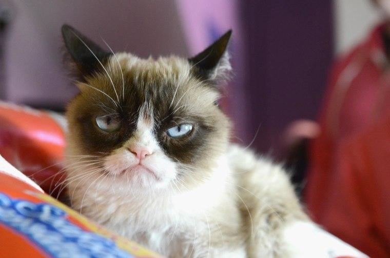 "Image: Internet sensation ""Grumpy Cat"""